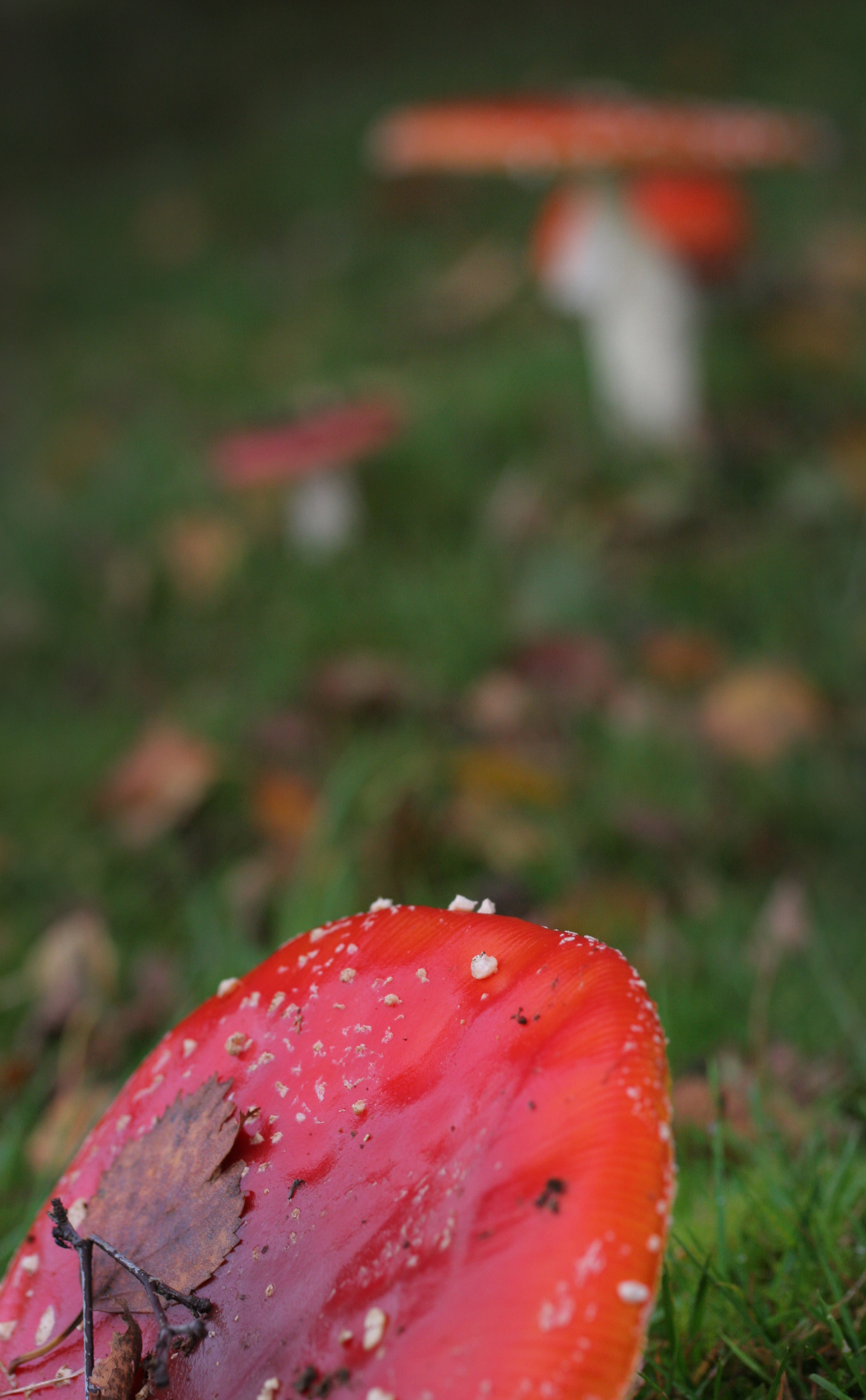 Autumn Agarics
